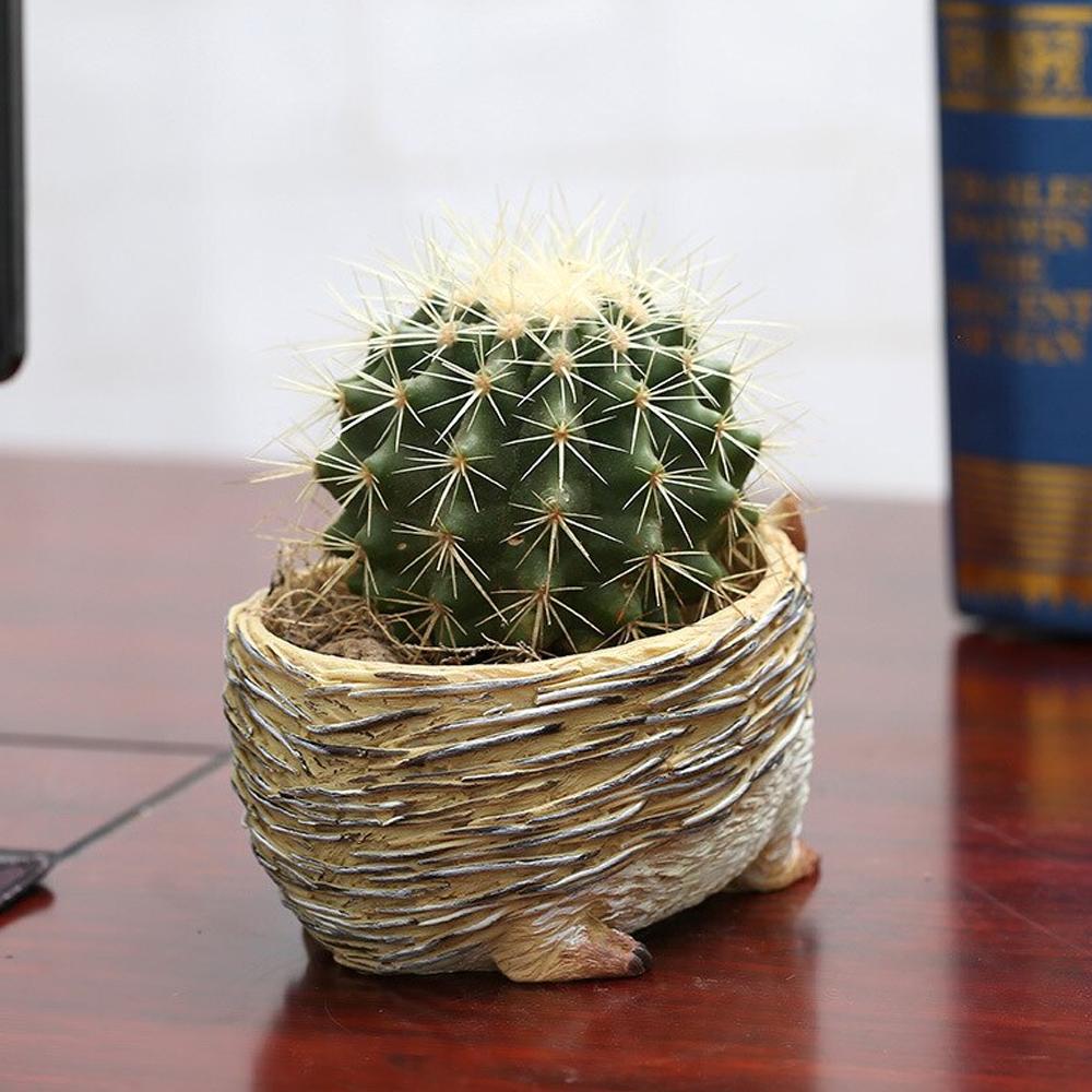 hedgehogplanter5