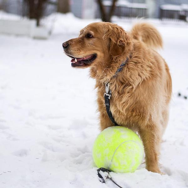 Doggy Jumbo Ball