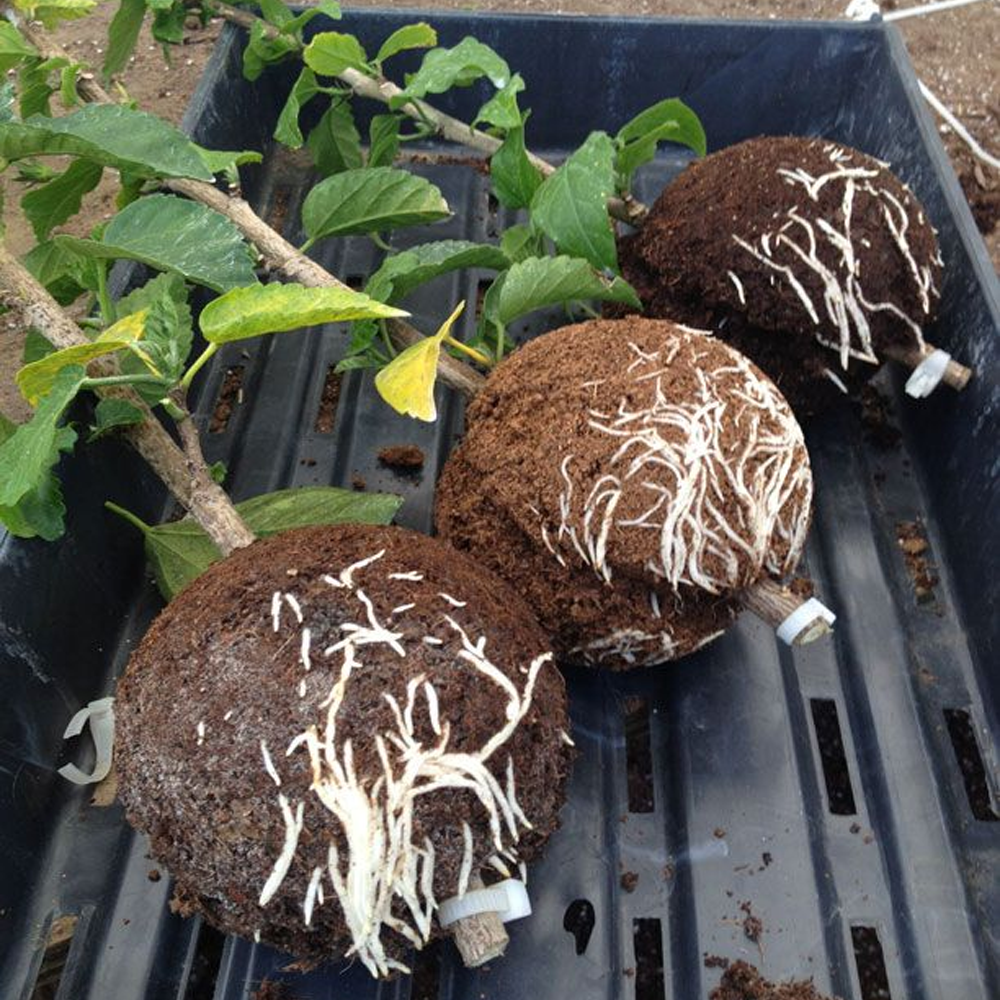 Instant Plant Root Growing Box